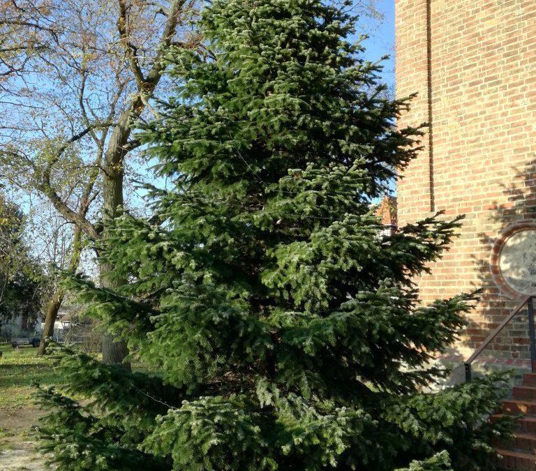 30.11.2019 – Weihnachtsbäume aufgestellt